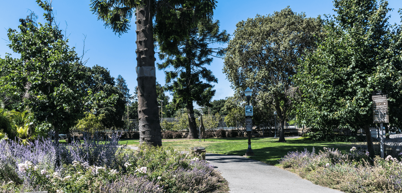 Central Park in San Mateo